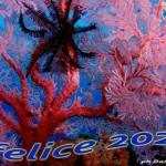Info WAC 01-2020: Buon anno a tutti gli amici del Mare; rinnovo tessera 2020